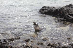 Enjoy wild nature in Galapagos