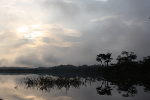 Spend several nights in lodge in Amazon Rain Forest