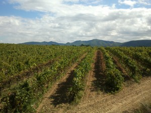 Vineyards Vilarnau